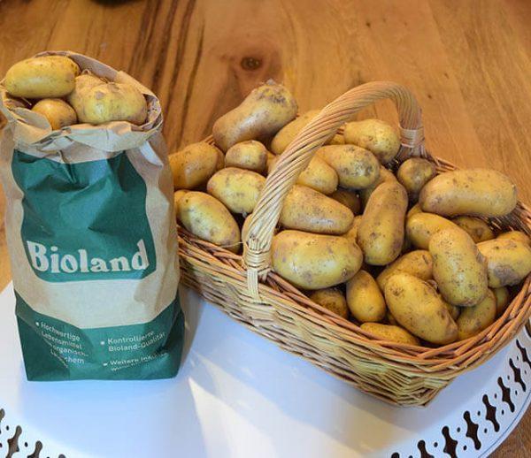 kartoffeln-kategorie